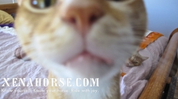 At various time, indoor cats have been a part of the herd. Hello from Charlie, to all the cat lovers out there.