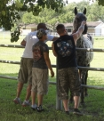 All Xena's Horses PTSD work photo 2