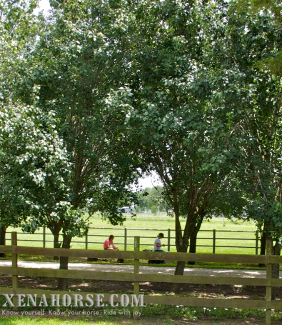 Guests find a quiet spot for lunch during Wellness Day, June 29th. Wellness Day is a recurring event held in west Houston by All Xena's Horses. These events are dedicated to bringing healthcare practitioners and educational resources for people and animals to the local area in an easily accessible, family-friendly environment. Learn more and see the schedule for upcoming events at xenahorse.com.