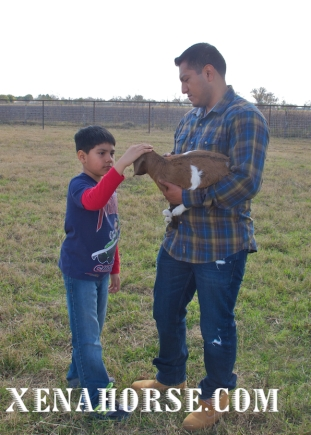 December visit baby goat 3