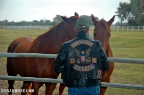 A volunteer from the Liberators Motorcycle Club takes a moment with the horses.