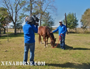 "KHOU Ch. 11 reporter Len Cannon, with therapy horse ""Red,"" films at The Xena Project during the news team's visit in late November. The Xena Project is a veteran-operated 501(c )3 that facilitates healing for veterans and their families through equine and animal therapy; learn more at xenahorse.com"