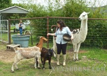 Animals clamor for attention (and treats!) during a family event on April 18th.