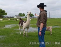 A Marine entices a llama with tasty treats. It'll work... eventually..... :)