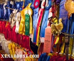 The best at all things involving llamas - shots of the trophy house (truly, the awards fill an entire house!) at Figment Llama Ranch.